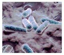 Биогеотехнологии (часть 1)